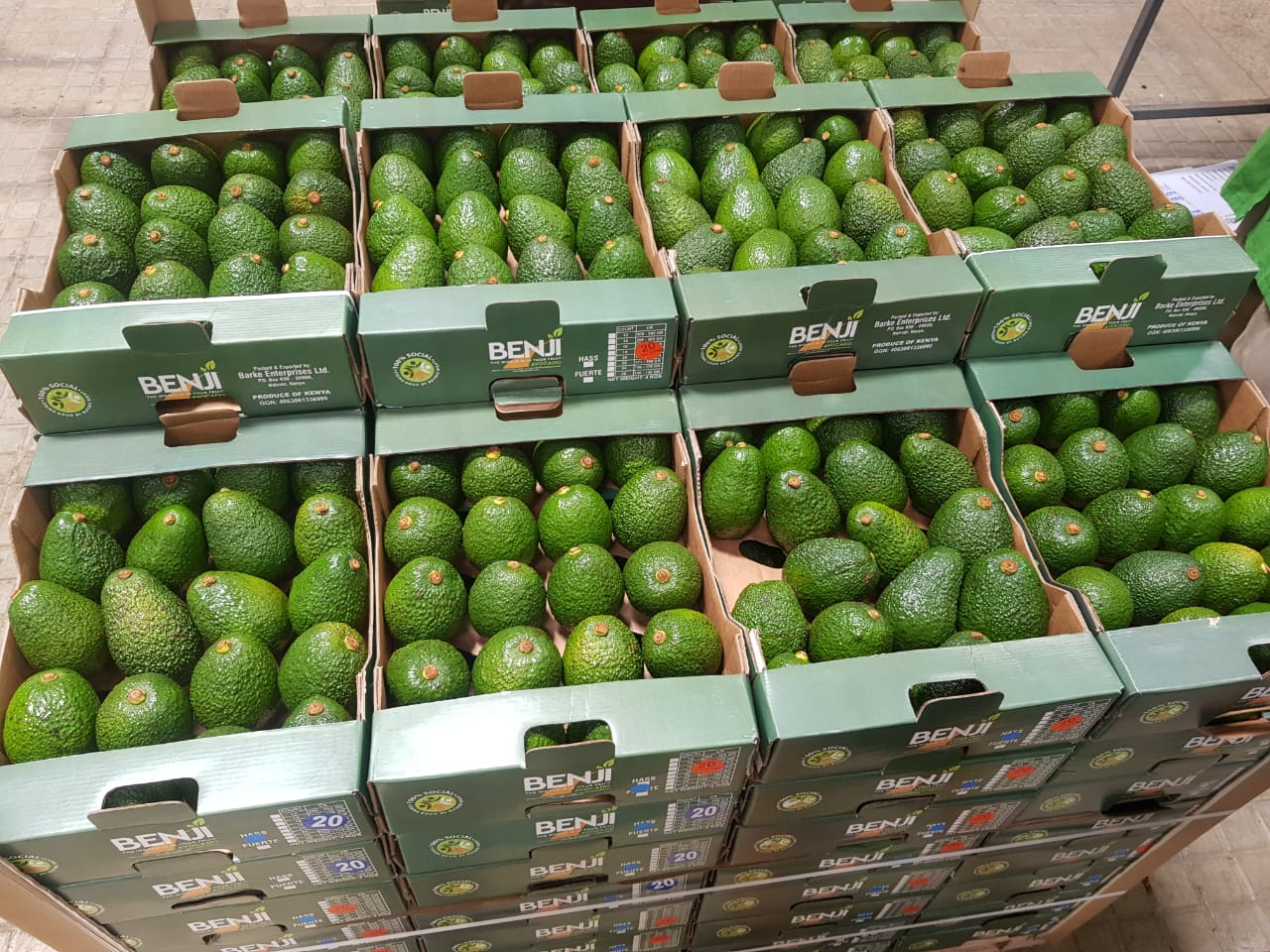 Boxes of harvested avocadoes in Kenya - Beva Fruits International (BFI)