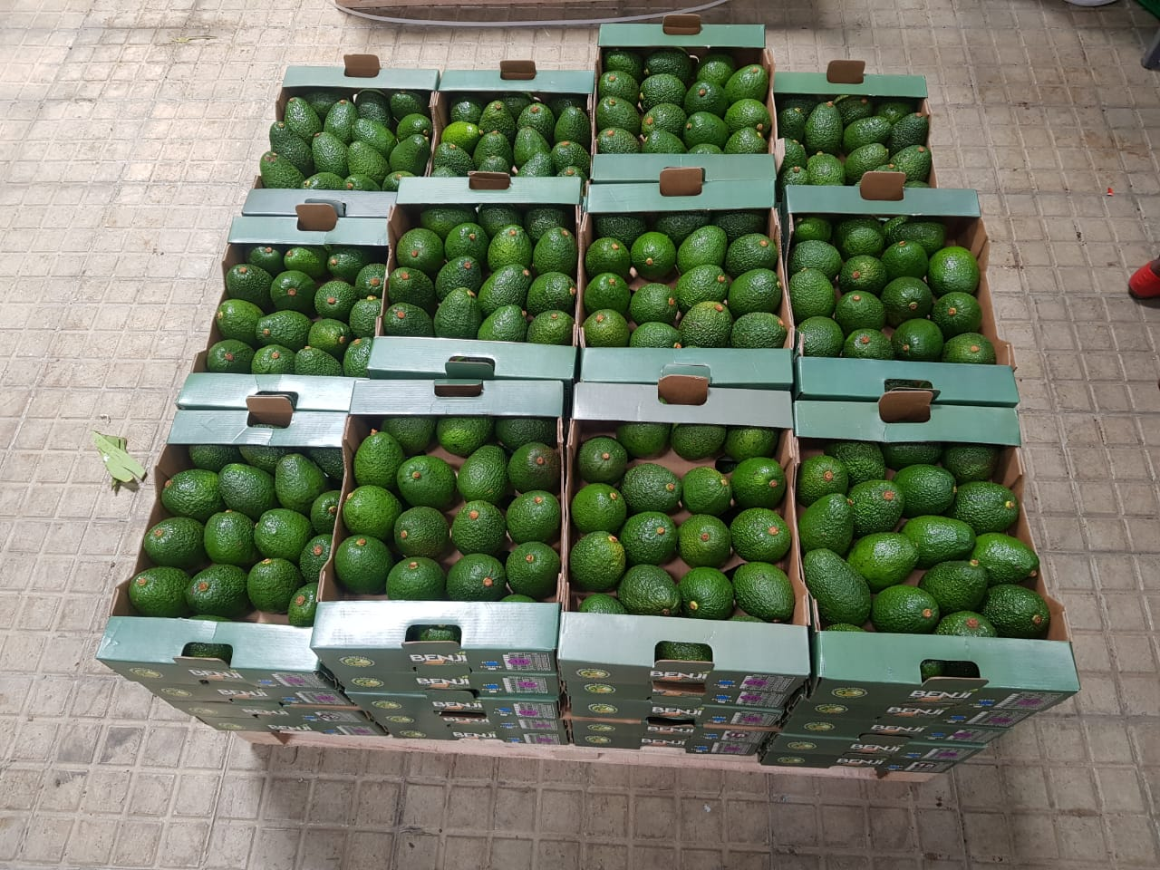 Boxes of harvested hass avocadoes in Kenya - Beva Fruits International (BFI)